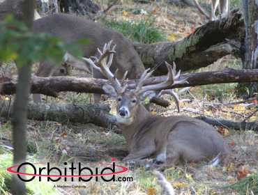 Buck #474, Whitetail Deer Hunt, Schedule your hunt for any time between December 2 through...